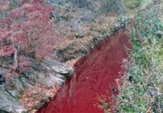 শূকরের রক্তে লাল হয়ে গেছে নদীর পানি