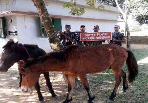 তাহিরপুরে ভারতীয় চোরাই পণ্যসহ ঘোড়ার চালান আটক