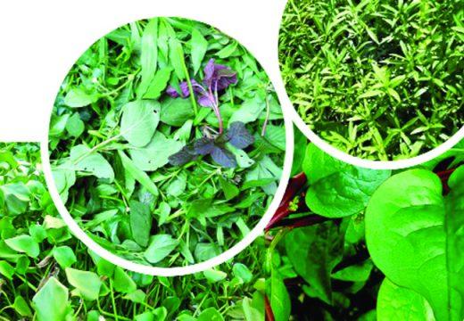 কচুরিপানা ও খাদ্য তালিকায় শাক-সবজি প্রসঙ্গে