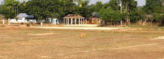 কমলগঞ্জে দখল হয়ে যাচ্ছে স্বাস্থ্য মন্ত্রণালয়ের জমি