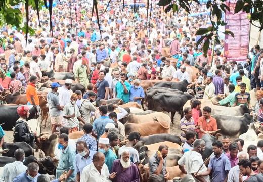 'পশুর হাট গুলোতে করোনা ভয়াবহ আকার ধারণ করছে'